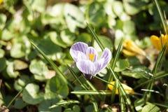 Fleur pourpre photographie stock
