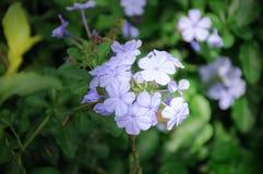 Fleur pourpre au parc floral Photographie stock