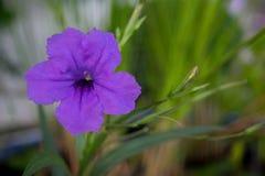 Fleur pourpre avec du charme Photographie stock