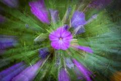 Fleur pourpre avec l'effet de tache floue Image libre de droits