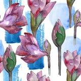 Fleur pourpre d'amaryllis d'aquarelle Fleur botanique florale Modèle sans couture de fond Illustration de Vecteur
