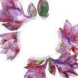 Fleur pourpre d'amaryllis d'aquarelle Fleur botanique florale Place d'ornement de frontière de vue Illustration de Vecteur