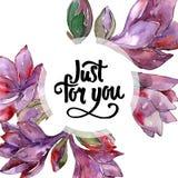Fleur pourpre d'amaryllis d'aquarelle Fleur botanique florale Place d'ornement de frontière de vue Illustration Stock