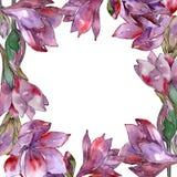 Fleur pourpre d'amaryllis d'aquarelle Fleur botanique florale Place d'ornement de frontière de vue Illustration Libre de Droits