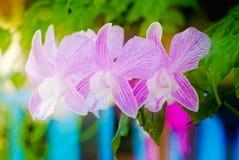 Fleur pourpre d'orchidée de tache floue molle dans le jardin photographie stock