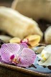 Fleur pourprée d'orchidée Image stock