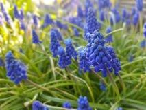 Fleur pourpre dans l'herbe photos stock