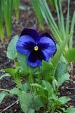 Fleur pourpre dans la forêt tropicale image libre de droits