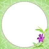 Fleur pourpre de bigorneau Images libres de droits