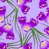 Fleur pourpre de crocus sur Violet Background légère Illustration de vecteur Illustration Stock