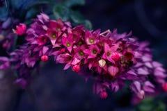 Fleur pourpre de fleurs pendant le ressort images libres de droits