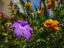 Fleur pourpre en tant qu'objet principal Photographie stock