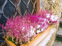 Fleur pourpre minuscule dans la saison d'hiver de neige de panier photographie stock libre de droits