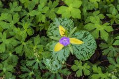 Fleur pourpre minuscule dans les montagnes fumeuses photo libre de droits