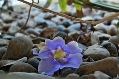 Fleur pourpre se trouvant sur la terre en pierre, automne Image stock