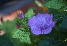 Fleur pourpre sur le fond vert de pétales Photographie stock