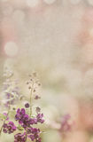 Fleur pourpre sur le vieux fond de papier Images stock