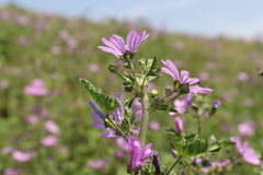 Fleur pourpre sur un fond naturel Photographie stock