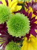 Fleur pourpre verte Images stock