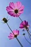 Fleur prise de l'angle faible Photo stock