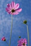 Fleur prise de l'angle faible Images libres de droits