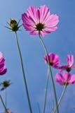 Fleur prise de l'angle faible Image stock