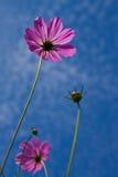 Fleur prise de l'angle faible Image libre de droits
