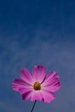 Fleur prise de l'angle faible Photographie stock