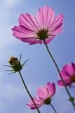 Fleur prise de l'angle faible Images stock
