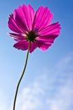 Fleur prise de l'angle faible Photographie stock libre de droits
