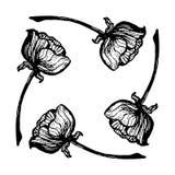 Fleur quatre noire et blanche Image stock