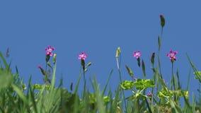 Fleur quatre rose banque de vidéos
