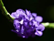 Fleur qui attire des papillons image libre de droits