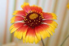 Fleur qui chauffe l'âme photographie stock libre de droits