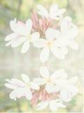 Fleur reflétée dans l'eau Photographie stock libre de droits