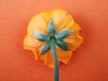 Fleur renversée photos libres de droits