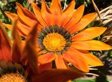 Fleur renversante de jardin Image libre de droits