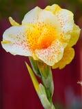 Fleur repérée par jaune Photographie stock