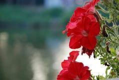 Fleur romantique de l'amour Photographie stock