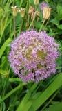 Fleur ronde Image libre de droits