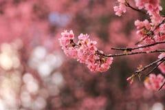 Fleur rosâtre Images stock