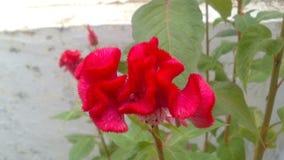 Fleur rosâtre Photo stock