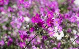 Fleur rosâtre Photos stock
