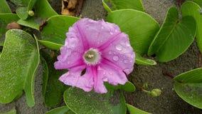 Fleur rosâtre Image libre de droits