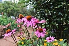 Fleur rose Photo libre de droits