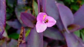Fleur rose avec l'abeille photos stock