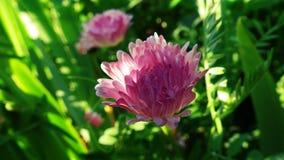 Fleur rose avec l'herbe verte photos libres de droits