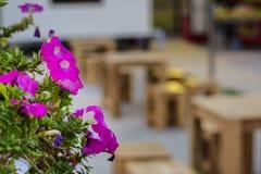 Fleur rose avec le fond de table de tache floue Images stock