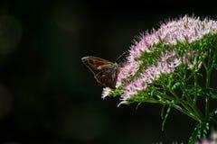 Fleur rose avec le papillon photographie stock libre de droits