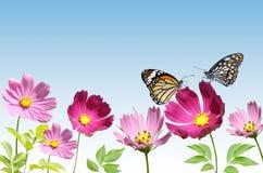 Fleur rose avec le papillon Photos stock